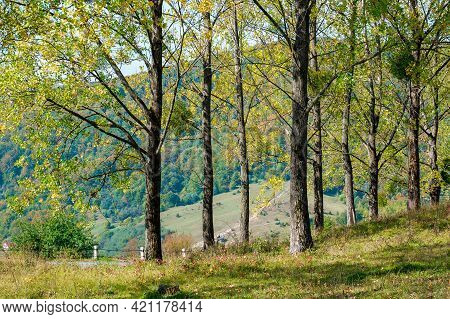 Trees On The Grassy Meadow. Countryside Mountain Scenery On A Bright Forenoon In Early Autumn. Wonde