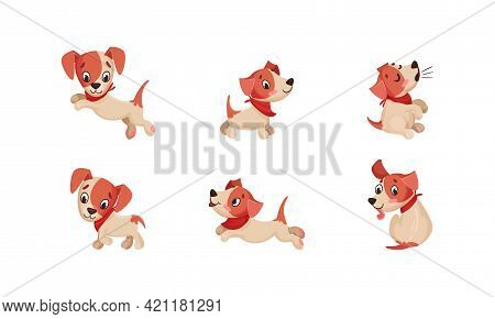 Funny Jack Russell Terrier Character Wriggling Tail, Running And Barking Vector Set
