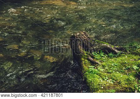 Vivid Nature Background With Tree Stump On Water Edge Of Small River In Vintage Tones. Scenic Landsc