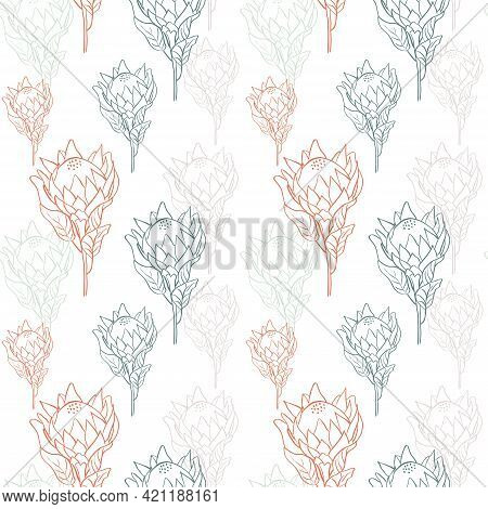 Flower Pattern With Tropical King Proteas In Blossom On White Background. Hand Drawn Line Style Vect