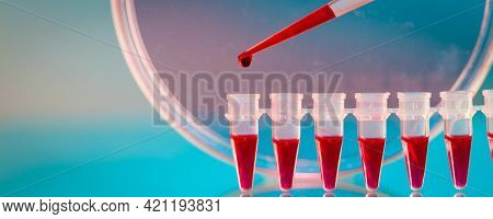 Pipette and Pcr strip PCR micro-tubes PCR Tubes on blue background