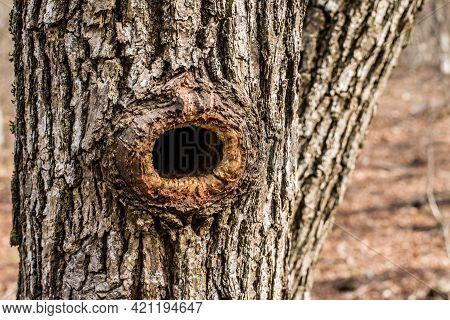 Hollow Oak, Made By Woodpecker, Oak Bark