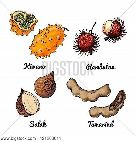 Vector Food Icons Of Fruits. Colored Sketch Of Food Products. Kiwano, Rambutan, Salak, Tamarind