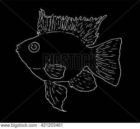 Apistogramma Aquarium Fish Vector Image. Butterfly Fish Is A Stylized Vector Image Drawn By Hand In