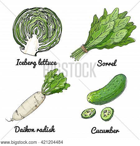 Vector Food Icons Of Vegetables. Colored Sketch Of Food Products. Iceberg Lettuce, Sorrl, Daikon Rad