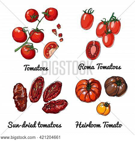 Tomatoes. Vector Food Icons Of Vegetables. Colored Sketch Of Food Products. Roma Tomatoes, Sun Dried