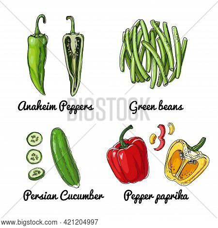 Vector Food Icons Of Vegetables. Colored Sketch Of Food Products. Anaheim Peppers, Green Beans, Pers