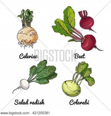Vector Food Icons Of Vegetables. Colored Sketch Of Food Products. Salad Radish, Celeriac, Kohlrabi,