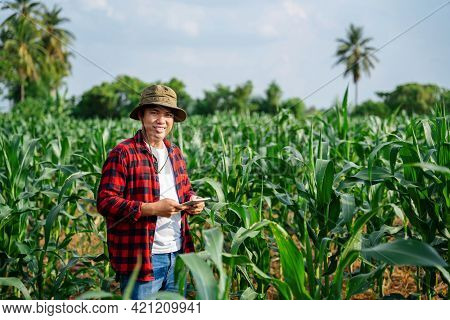 Asian Farmer Or Agronomist Inspect A Flowering Field And Corn Cobs. The Concept Of Agricultural Busi