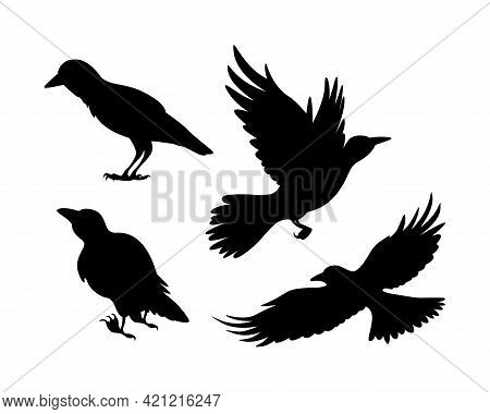 Cartoon Set Of Black Halloween Holiday Silhouette Elements Of Crows Isolated On White Background. Bl