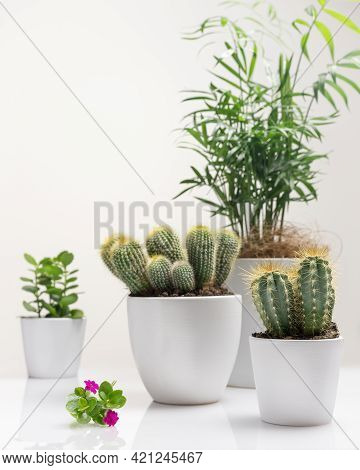 Hobbies Growing Home Plants And Gardening Apartments. House Gardening Composition With House Plant,