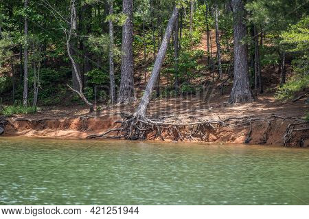 Low Levels At The Lake Lanier In Georgia Causing Erosion Along The Shoreline With Trees Hanging On T