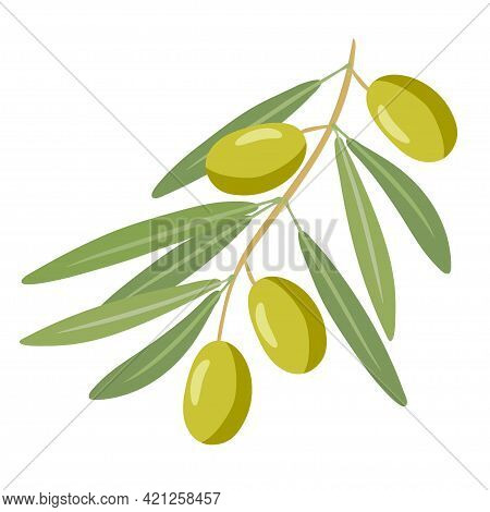 Olive Branch. Traditional Mediterranean Ingredient, Natural Plant. Overhead View Of Olives On Green