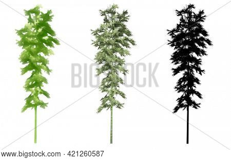 Set collection of Bamboo trees, painted, natural and as a black silhouette on white background. Concept or conceptual 3d illustration for nature, ecology and conservation, strength, endurance, beauty