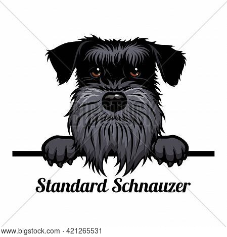 Standard Schnauzer - Dog Breed. Color Image Of A Dogs Head Isolated On A White Background