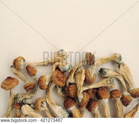 Pile Of Psilocybe Cubensis Mushrooms On White Background. Psilocybin Psychedelic Magic Mushrooms Gol