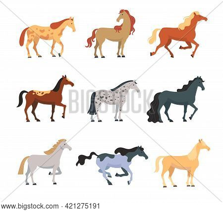 Different Breeds Of Horses Flat Vector Illustrations Set. Colorful Domestic Animals, American Mustan