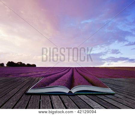 Creative composite image of Summer lavender landscape in pages of magic book poster