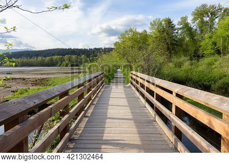 View Of A Wooden Path Across A Swamp In Shoreline Trail, Port Moody, Greater Vancouver, British Colu