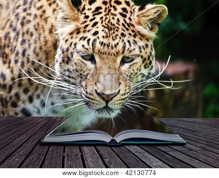 Creative Concept Image leopard In Pages Of Book