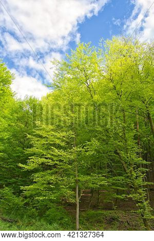 The Palatinate Forest In Spring. Palatinate Forest-north Vosges Biosphere Reserve, Germany