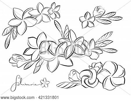 Set Of Buds Of Blooming Plumeria Flowers On A Branch And Separately . Isolated Line Art, Drawing, Bl