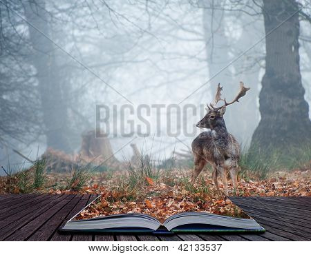 Landscape of forest in fog during Winter Autumn Fall with fallow deer roamingin pages of magical book poster