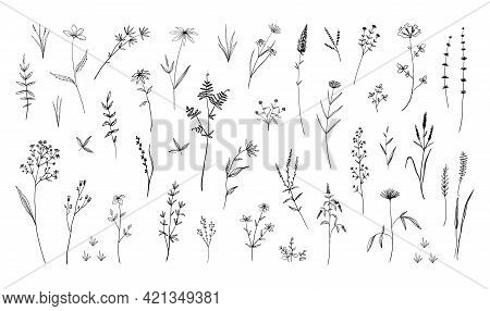 Wild Flowers. Hand Drawn Field Blooming Herbs With Leaves Or Stems. Black And White Doodle Blossom.