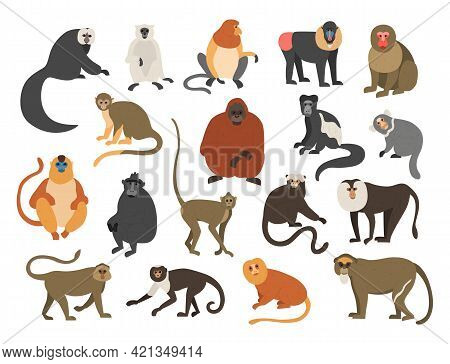 Cartoon Monkeys. Exotic Tropical Animals. Different Types Of Primate Breeds. Mandrill And Bekantan.
