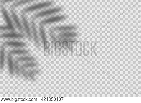Palm Leaf Shadow. Vector Overlay Effect With Tropical Leaves. Realistic Vector Shade Mockup