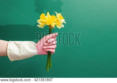 A Hand In A Rubber Glove Holds A Bouquet Of Daffodils. Copy Space. Green Background. The Concept Of