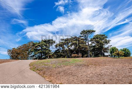 Old Cypresses (hesperocyparis Macrocarpa, Commonly Known As The Monterey Cypress) Against Dramatic S