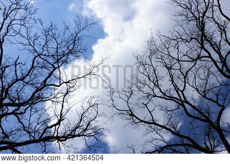 Silhouette Of Bare Black Trees Without Leaves On A Background Of A Blue Light Sky With Clouds. Contr