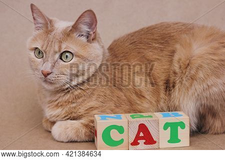 The Word Cat Is Laid Out In Wooden Cubes Next To The Red Cat. Learning English. English For Children