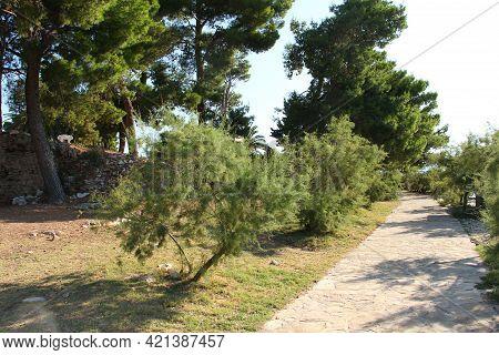 Walkway Around Old Cemetery In Town Supetar, Island Of Brac, Pines Around