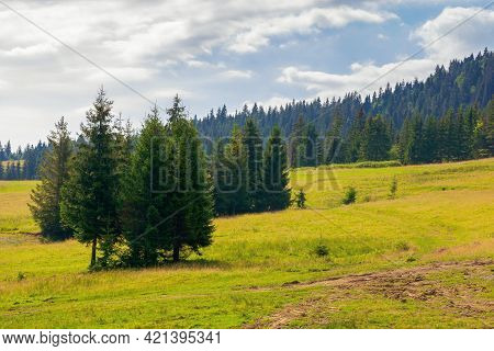 Fir Trees On The Hills And Meadows. Summer Mountain Landscape In The Forenoon