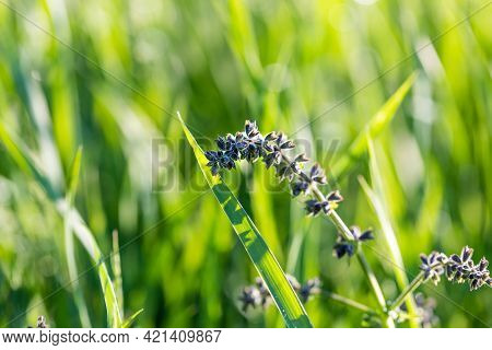 Fresh Spring Grass Color And Flowers After Rain, Evening Ligh