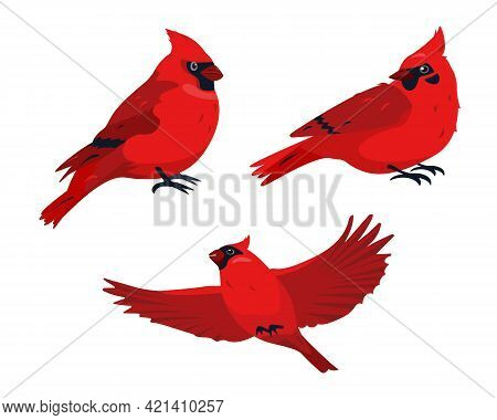 Sitting And Flying Red Cardinal Bird Icons Isolated