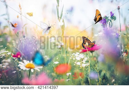 Butterfly Flower Images. This Photo Contains A Beautiful Butterfly With Wings Sitting On Flowers.