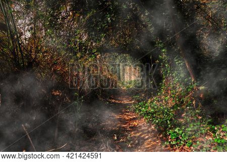 Mysterious Path In The Woods - Dark Passage Through The Forest With Light And Shadows In The Plant T
