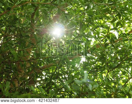 Beautiful Sunny Green Foliage Of Trees With Sun Beams And Rays Sparkle Through Branches Moving By Bl