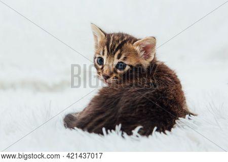 Little Marble Bengal Kitten On The White Fury Blanket