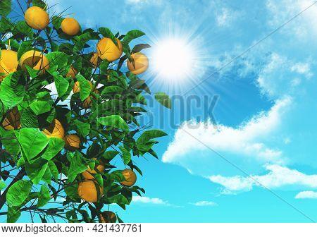 3D render of an orange tree on a sunny blue sky