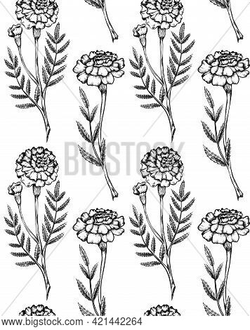 Seamless Pattern With Botanical Sketch Of Various Marigold Flowers With Shading. Vector Textile With