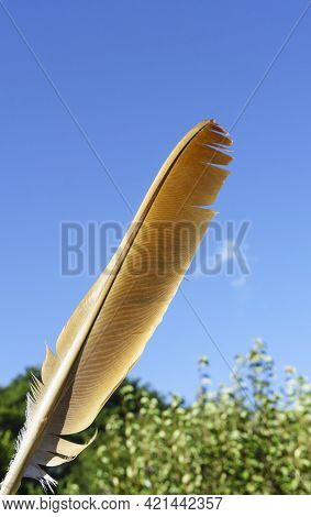 One Feather Of Nz Falcon Against Blue Sky