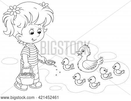 Little Girl Farmer Standing With A Bucket Of Feed Grain And Feeding A Merry Brood Of Small Ducklings