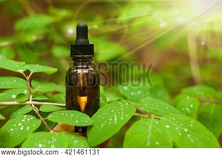 Brown Cosmetic Bottle: Face Serum Or Body Oil Among Green Leaves And Water. Natural Organic Skin Car