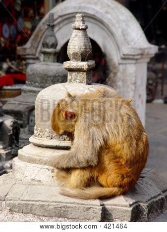 The Meditating Monkey