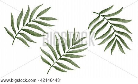 Tropical Palm Leaves Hand-drawn Watercolor Illustration Isolated On White Background