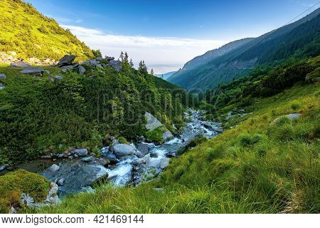 Alpine Balea Stream In Mountains. Water Flows Among The Stones And Trees. Beautiful Summer Landscape